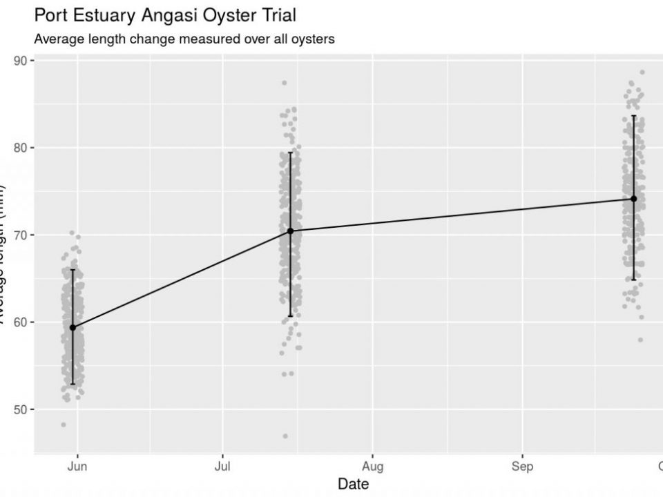 Graph of oyster growth