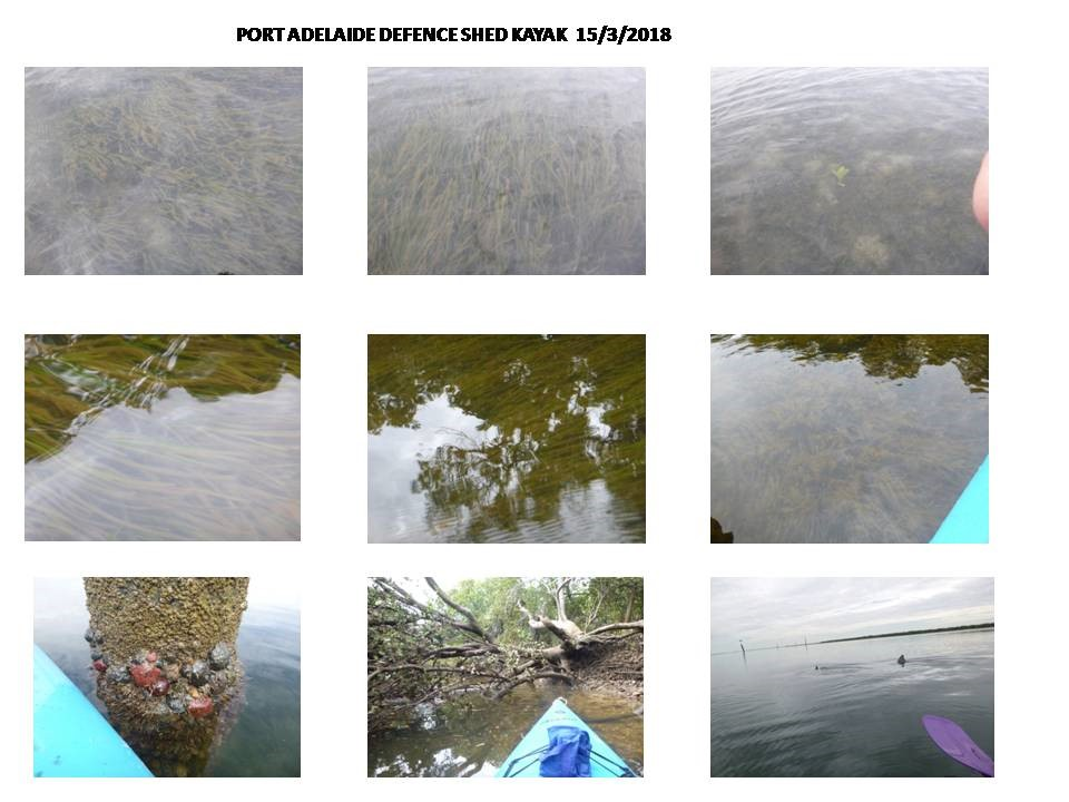 photos taken when kayaking in Barker Inlet and creeks to monitor seagrass