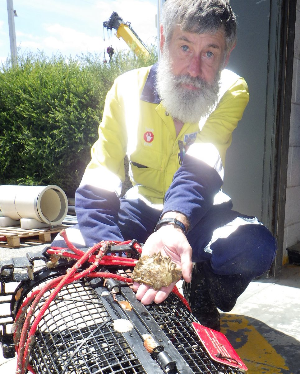 Native oyster and basket with Fletch ASC employee