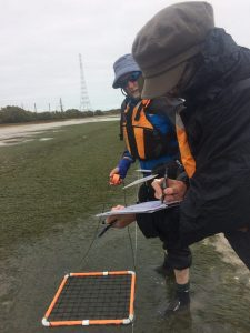 volunteers monitoring seagrass in Port River