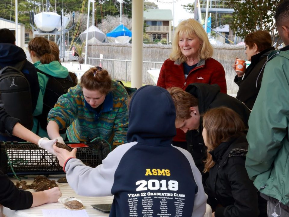 Aust Science & Maths School students at CYC, measuring adult oysters, part of a native oyster restoration trial