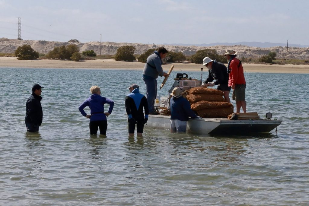 Estuary Care Foundation volunteers prepare to unload bags and stakes, from a punt, for restoration trial in Port River