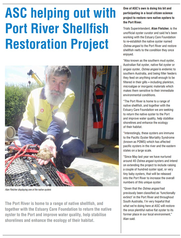 ASC newsletter outlines their involvement in trials to restore native oysters to Port River