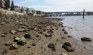 Reinstating rocks and a clean up are needed, along Inner Harbour seawall in Port Adelaide